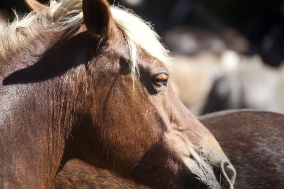 Pony Round-up 10