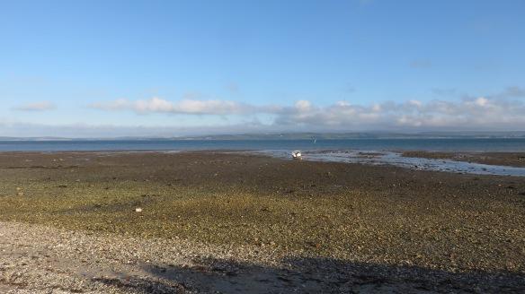 Salt marshes 2