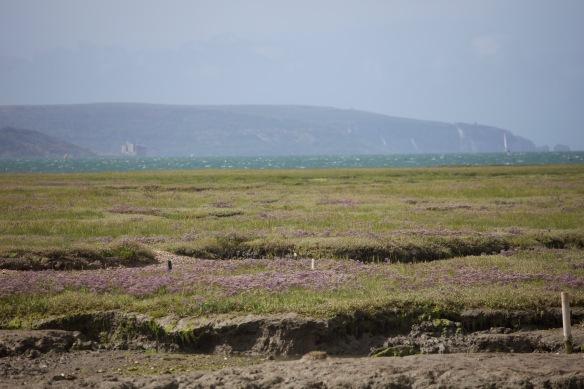 Saltmarsh and Isle of Wight