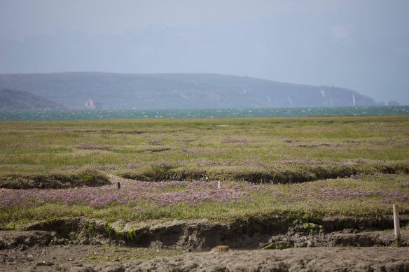Saltmarsh and Isle of Wight