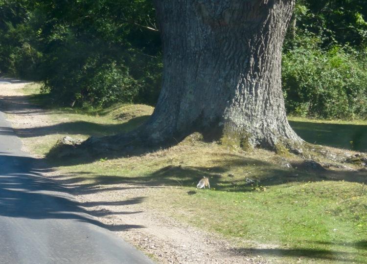 Squirrel and oak