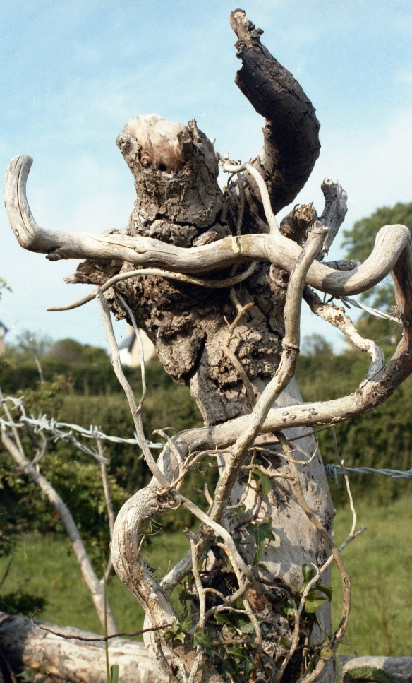 Stump and barbed wire 1985