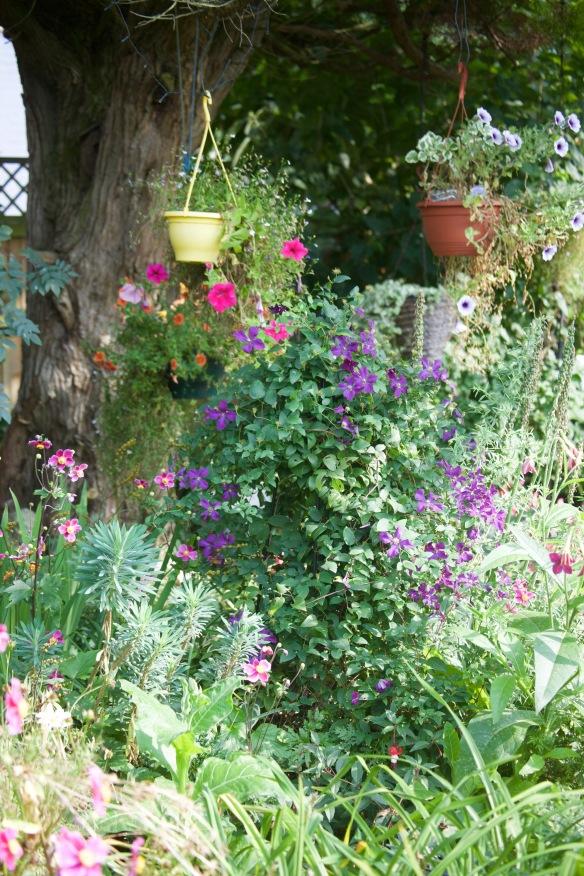 Clematis and petunias