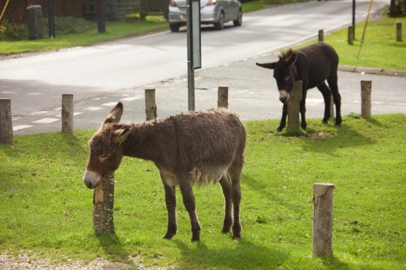Donkeys scratching