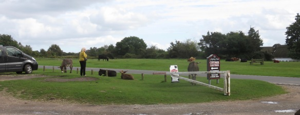 Donkeys and cattle