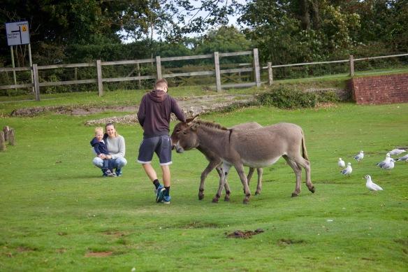 Donkeys and family