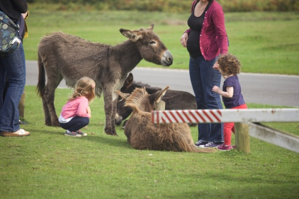 Family and donkeys
