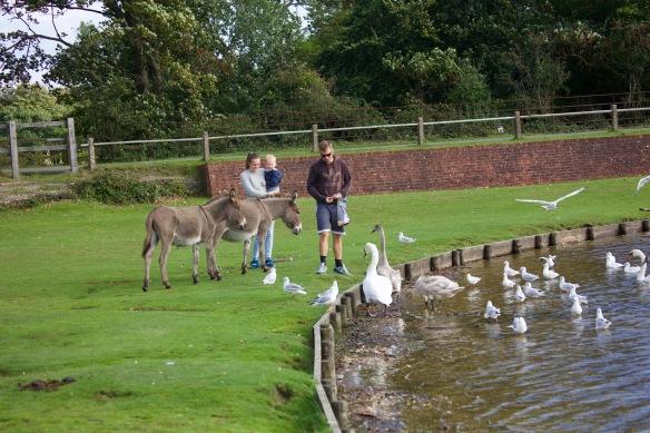 Feeding birds and donkeys 1