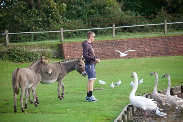Feeding birds and donkeys 2