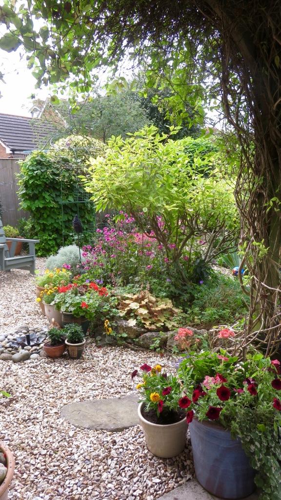 Frances's garden 1