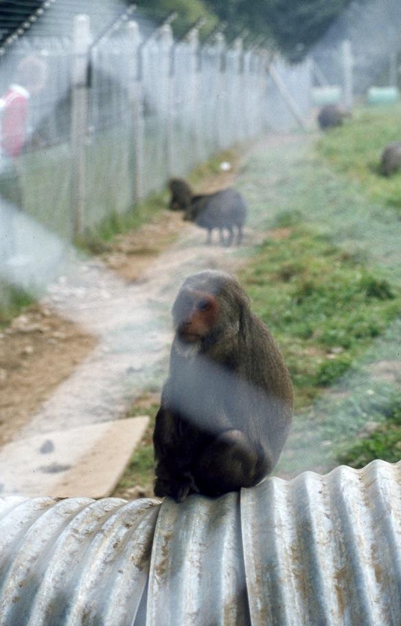 Monkey 9.82 1