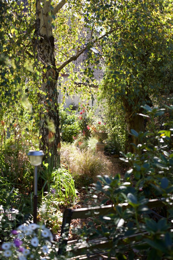 View through Weeping Birch Bed