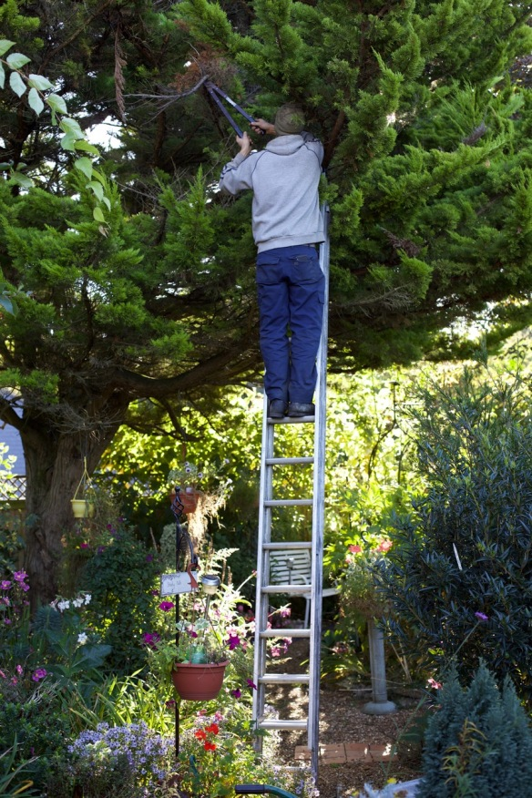 Aaron pruning cypress 2