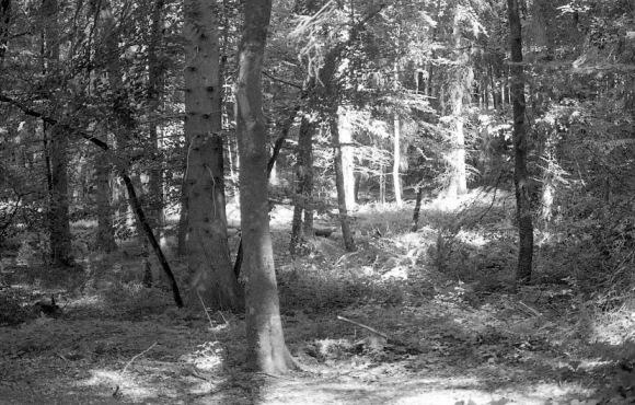 Woodland scene 1985 1