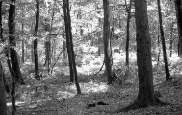 Woodland scene 1985 3