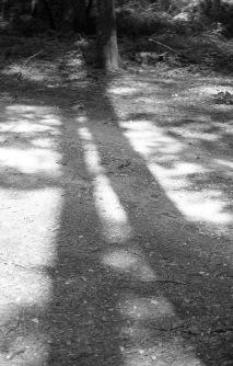 Tree shadows 1985 1