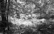 Woodland scene 1985 8