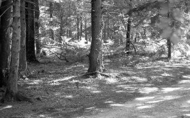 Woodland scene 1985 9