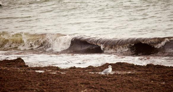 Wave, gull, seaweed 1