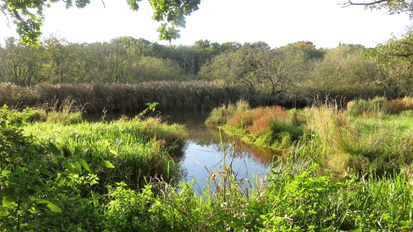 Reedbeds from footpath