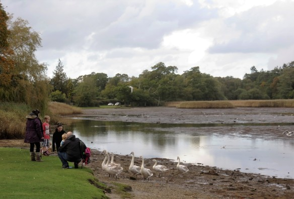 Beaulieu river, birds, family