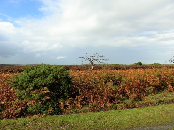 Landscape with bracken and dead tree