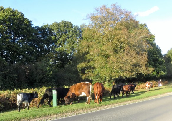 Cattle led by farmer