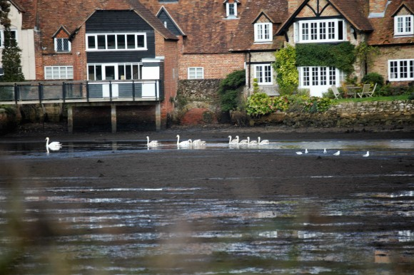Swans and gulls on Beaulieu River