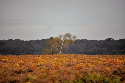 Bracken landscape