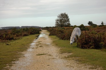 Pony and footpath