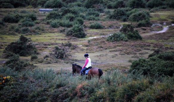 pony and rider