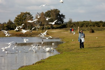 Jackie feeding gulls
