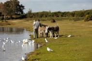 Matthew, Poppy, donkeys
