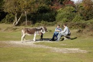 Jackie, Matthew, Poppy, donkeys
