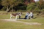 Jackie, Matthew, Poppy, donkeys