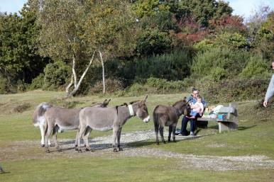 Jackie, Poppy, donkeys