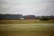 Galloping riders
