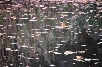 Leaves on water 2