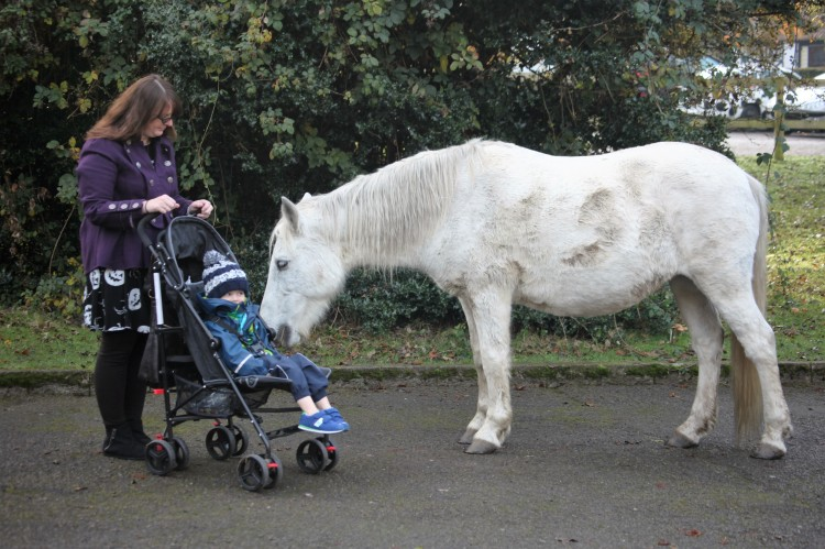 Pony and child in pushchair