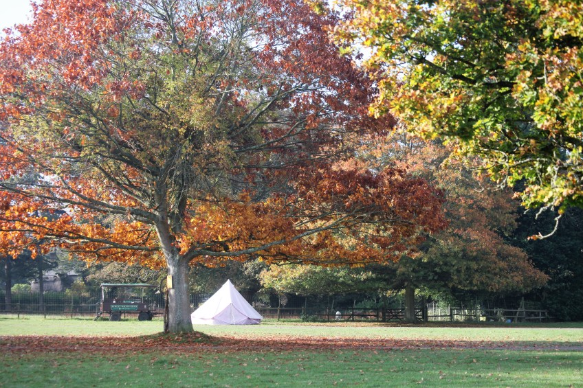 Autumn scene with tent and wagon