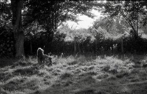 Jessica in field 1985 2