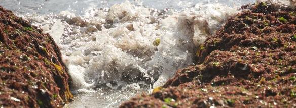 Spray and seaweed
