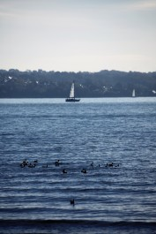 Yacht and geese