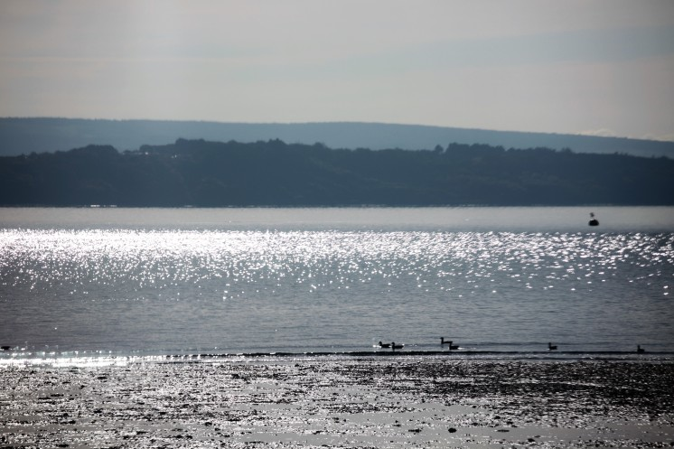 Sparkling water, Isle of Wight