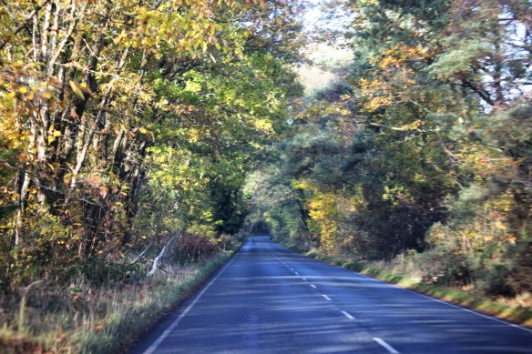 Holmsley road