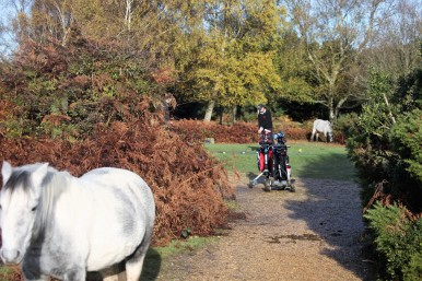 Golfer and ponies