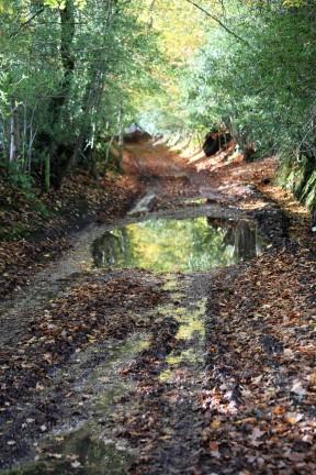 Reflections on Honey Lane