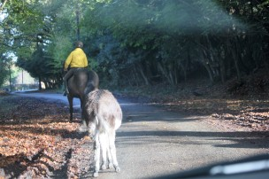Horse, rider, donkey
