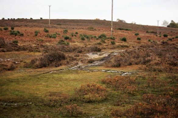 Holmsley Bog