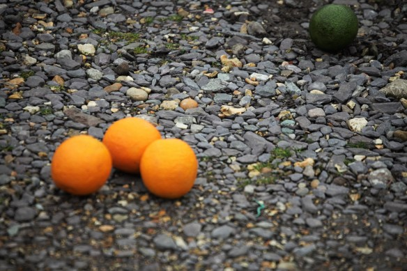 Oranges and avocado